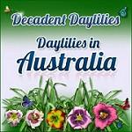 Decadent Daylilies Icon