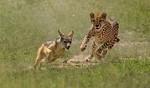 Kenya Holiday Safari Icon