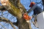 A Cut Above Tree Service LLC Icon
