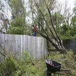 Pasco Tree Service Icon
