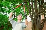 Jose Tree Service LLC Icon