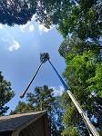 Ridge Tree Trimming Service Icon