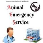 Animal Emergency Service Icon