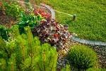 San Antonio Landscaping, Tree & Lawn Icon