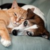 Hurley Dog and Cat Hospital Icon