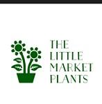 The little market Plants Icon