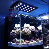 Aquarium-solution Icon