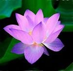 Honn Paradis Thaï Massages Icon