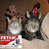 Fetch! Pet Care South Hills of Pittsburgh and Oakdale Dog Walking,  Dog Boarding and Pet Sitting Icon