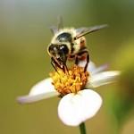 Florida Bee Investigator LLC Icon