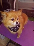 Penny's Dog Grooming Soddy Daisy Icon