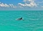 Wild Dolphins Tour Icon