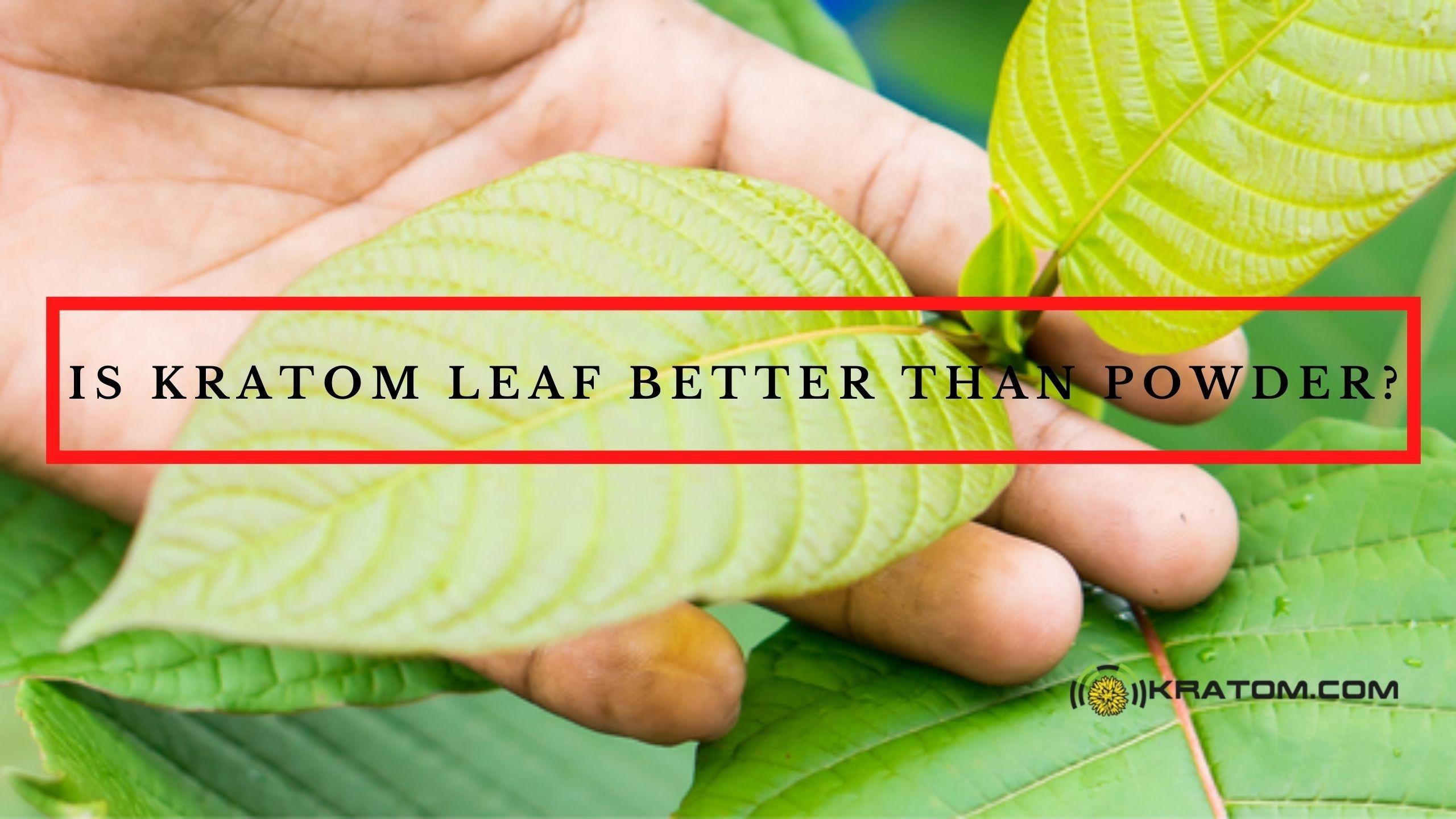Is Kratom Leaf Better Than Powder?