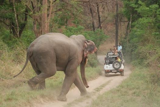 Jim Corbett National Park Packages | Book Now Corbett Tour Packages | BizareXpedition