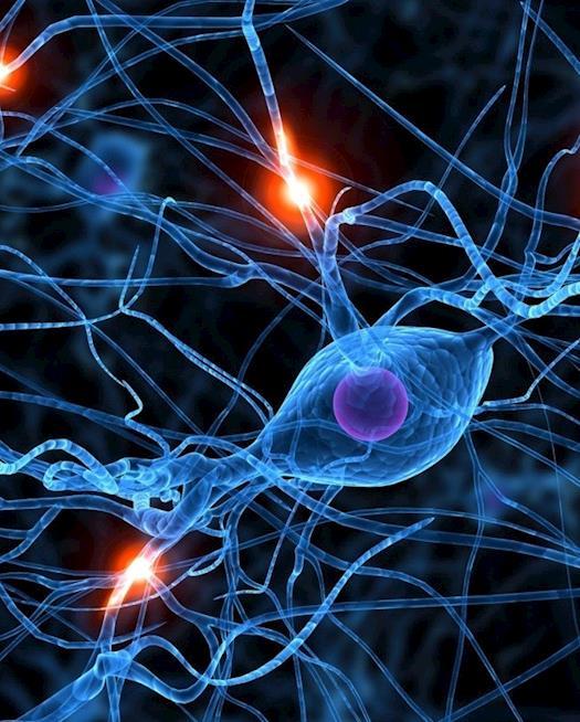 Texila Digipedia |Neuroscience
