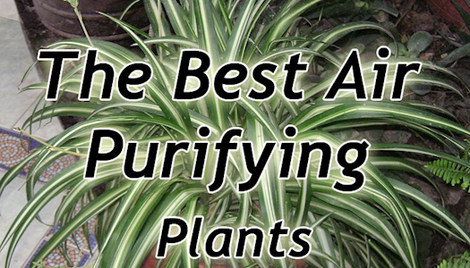 Air Purifying Indoor Plants | ecohindu.com