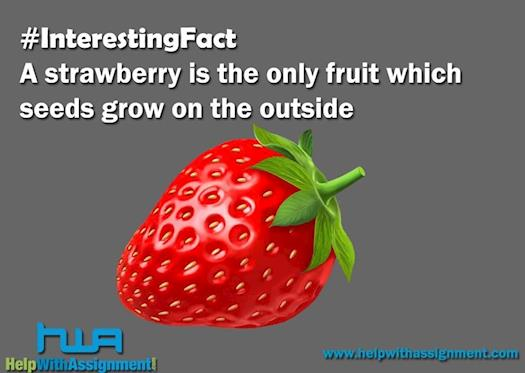 Interesting fact on strawberry