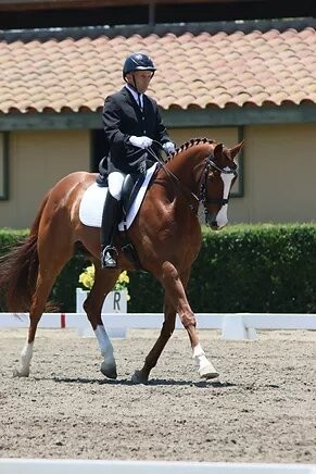 Los Angeles Dressage Stable