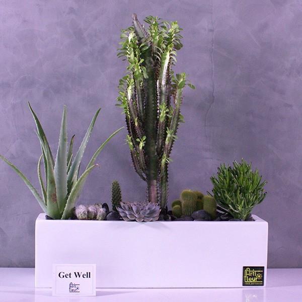 Office Desk Plants - Buy Office Plants Online at Best Price
