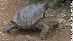 Diego, the tortoise who saved his entire species, finally retires to uninhabited island.