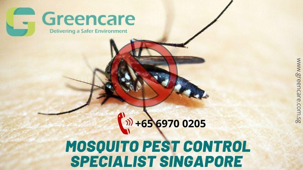 Mosquito Pest Control Specialist Singapore – Greencare