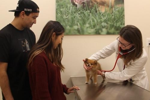 WellCare Veterinary Services
