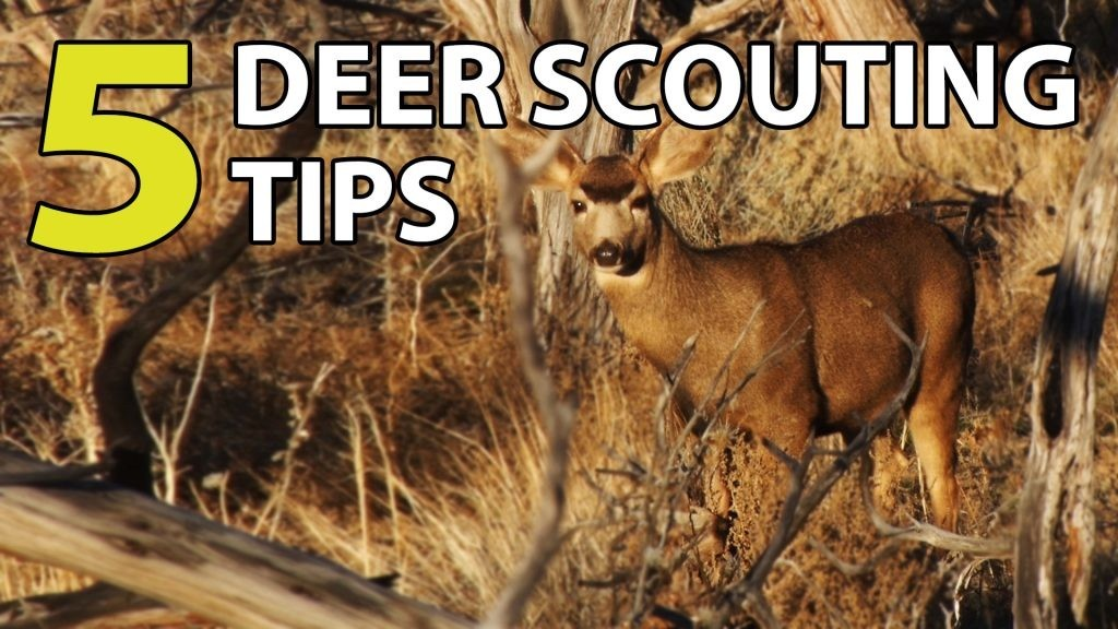 Deer Scouting Tips for a More Successful Hunting Season