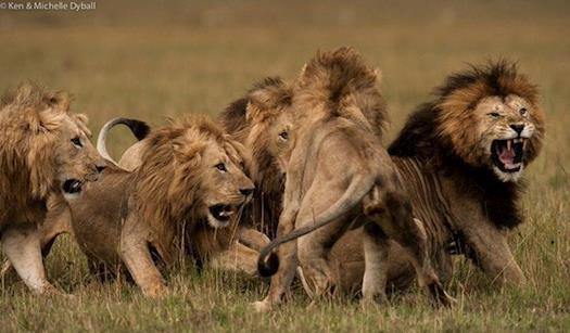 African Safari Tours Packages