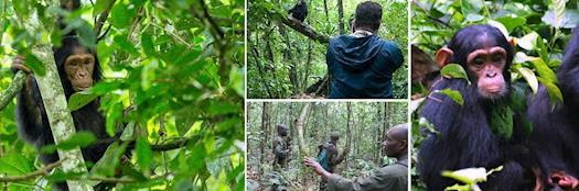 Rwanda Gorilla trekking Safari Tours
