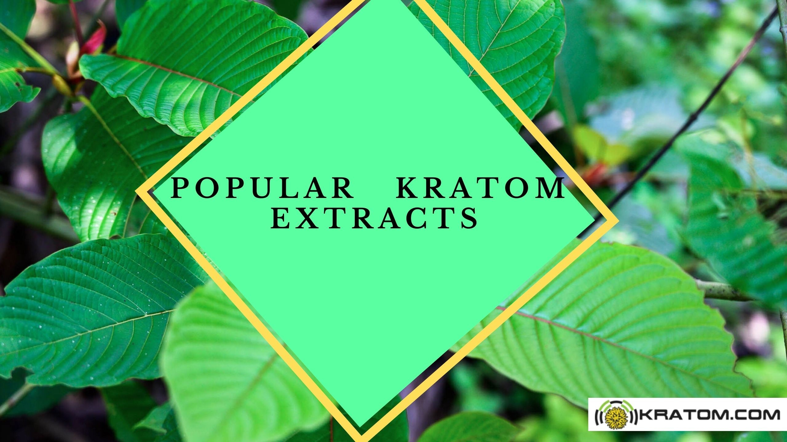 Top Extracts Review | Popular Vendor of Online Kratom Extracts