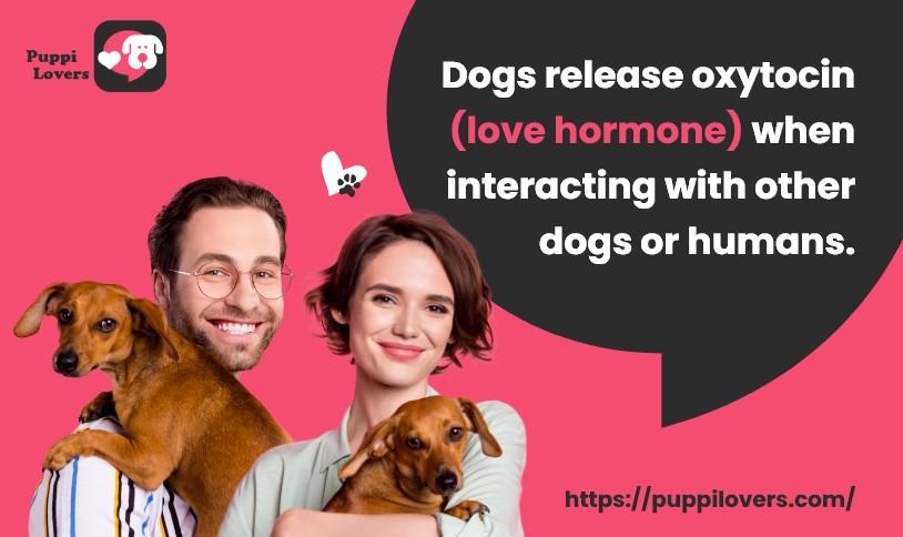 Puppi Lovers Tips
