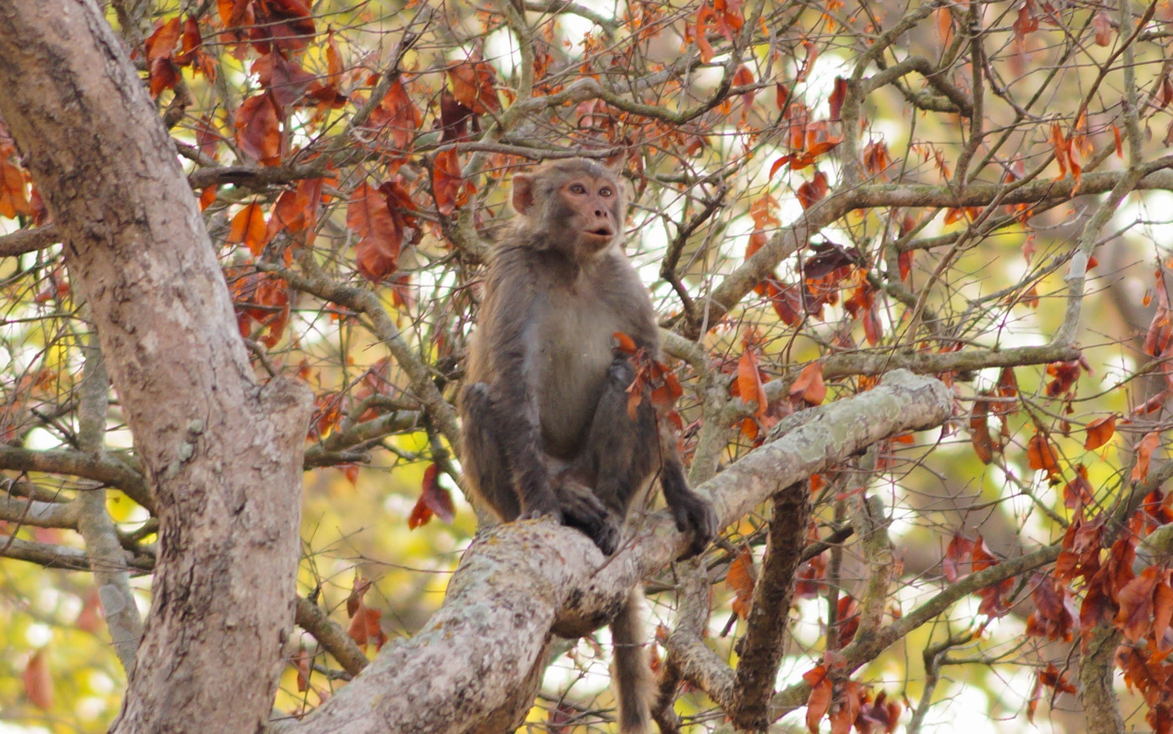 Dudhwa National Park | Dudhwa Tiger Reserve