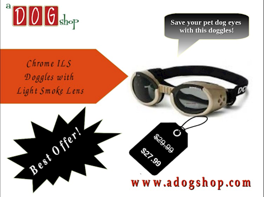 Perfect Doggles For Your Pet Dog