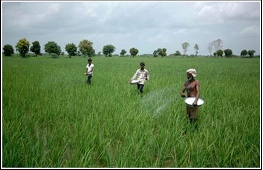 How fertilizers are killing Indian crops?