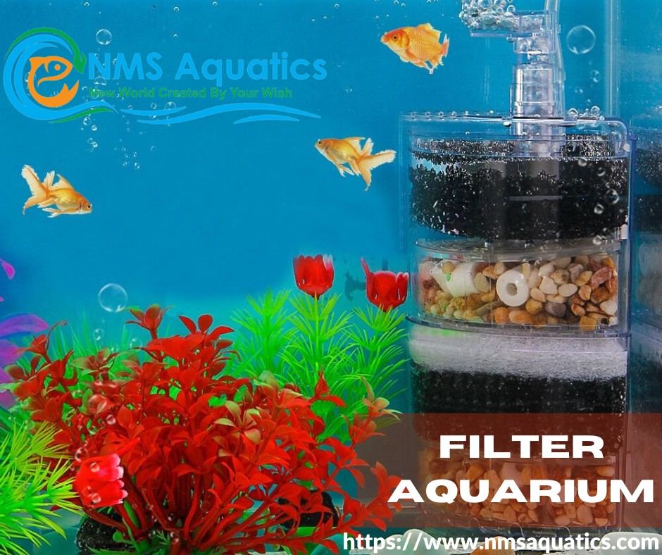 filter aquarium