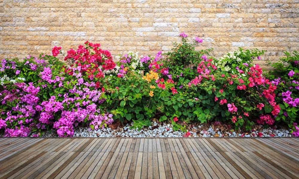 Buy Outdoor Plants Online | Great Deals on Mashatel