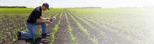 Servicio de desarrollo de software de administración de granja personalizada