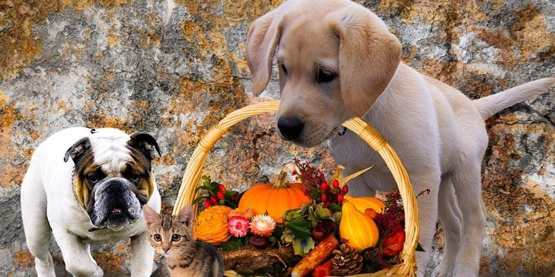 Different Ways to Celebrate Halloween Day with Your Pet