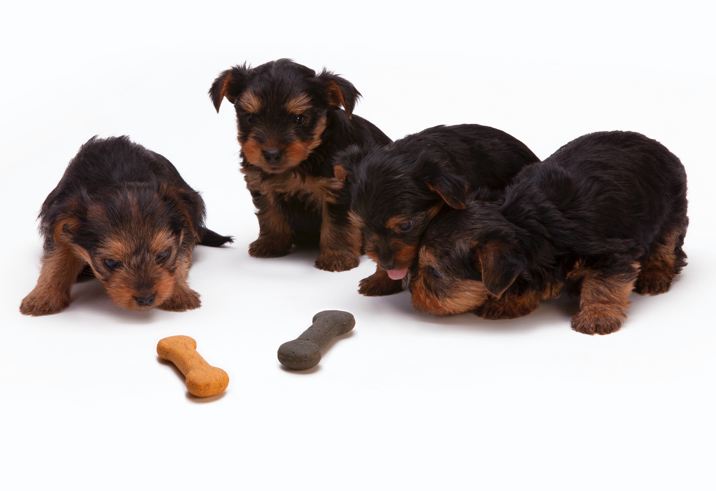 Know about Your Dog's Development Stages