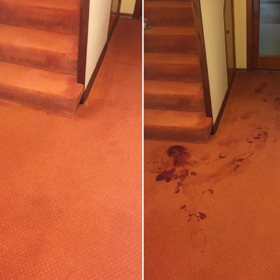 Carpet Cleaning and Stain Removal in Glasgow