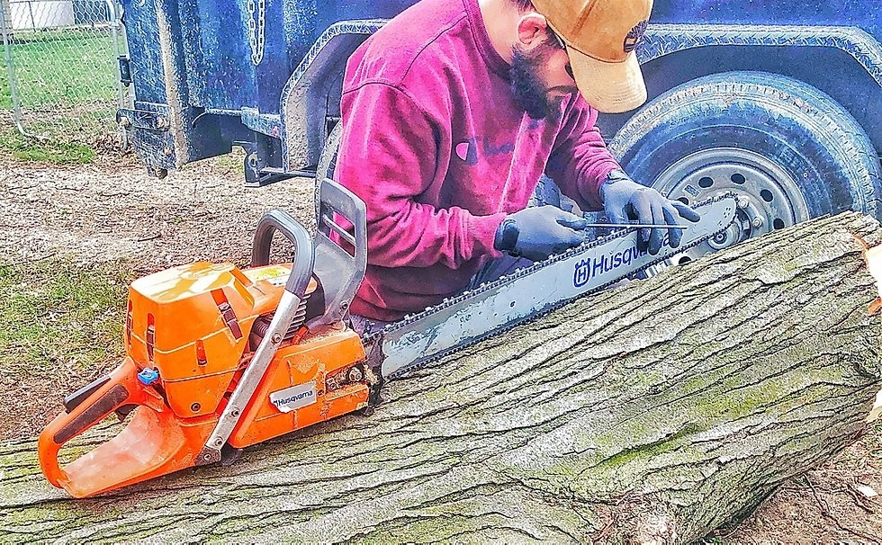 Tree Trimming Near Me - Urban Forestry Initiative
