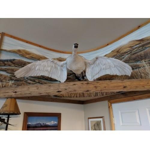 Kodiak Wilderness Adventures