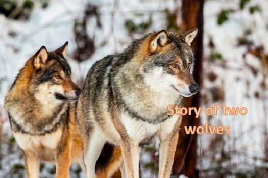Story of two wolves with a message