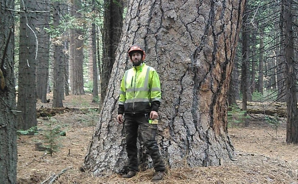 Tree Removal Near Me - Urban Forestry Initiative