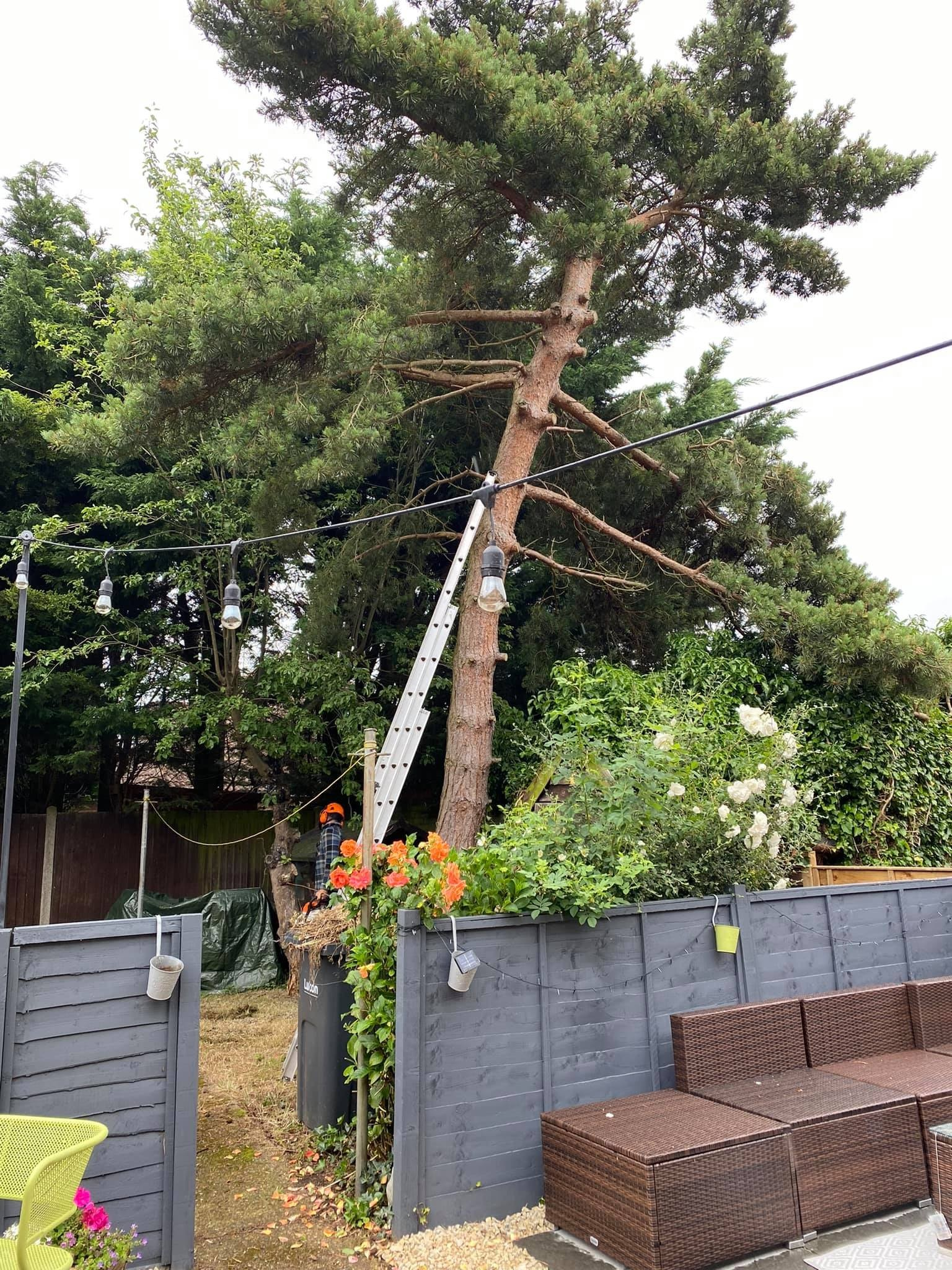 Professional Tree Service and Landscaping in Dunstable