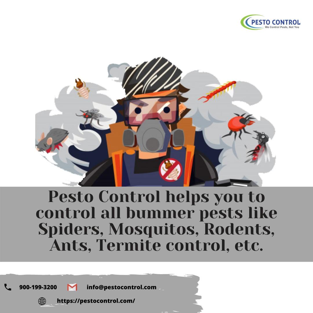 Termite Treatment in jaipur