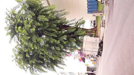 Save Tree Save Environment