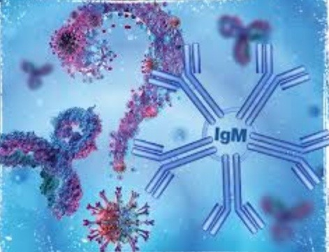 Check out more about IgM antibody test