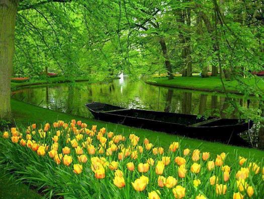 Keukenhof Gardens Lisse, Netherlands