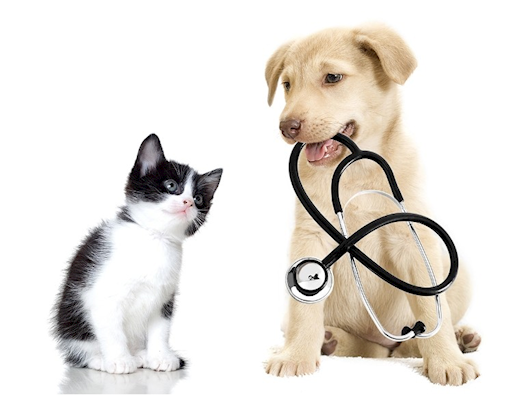 Veterinary Surgery for Small Animals in Albuquerque